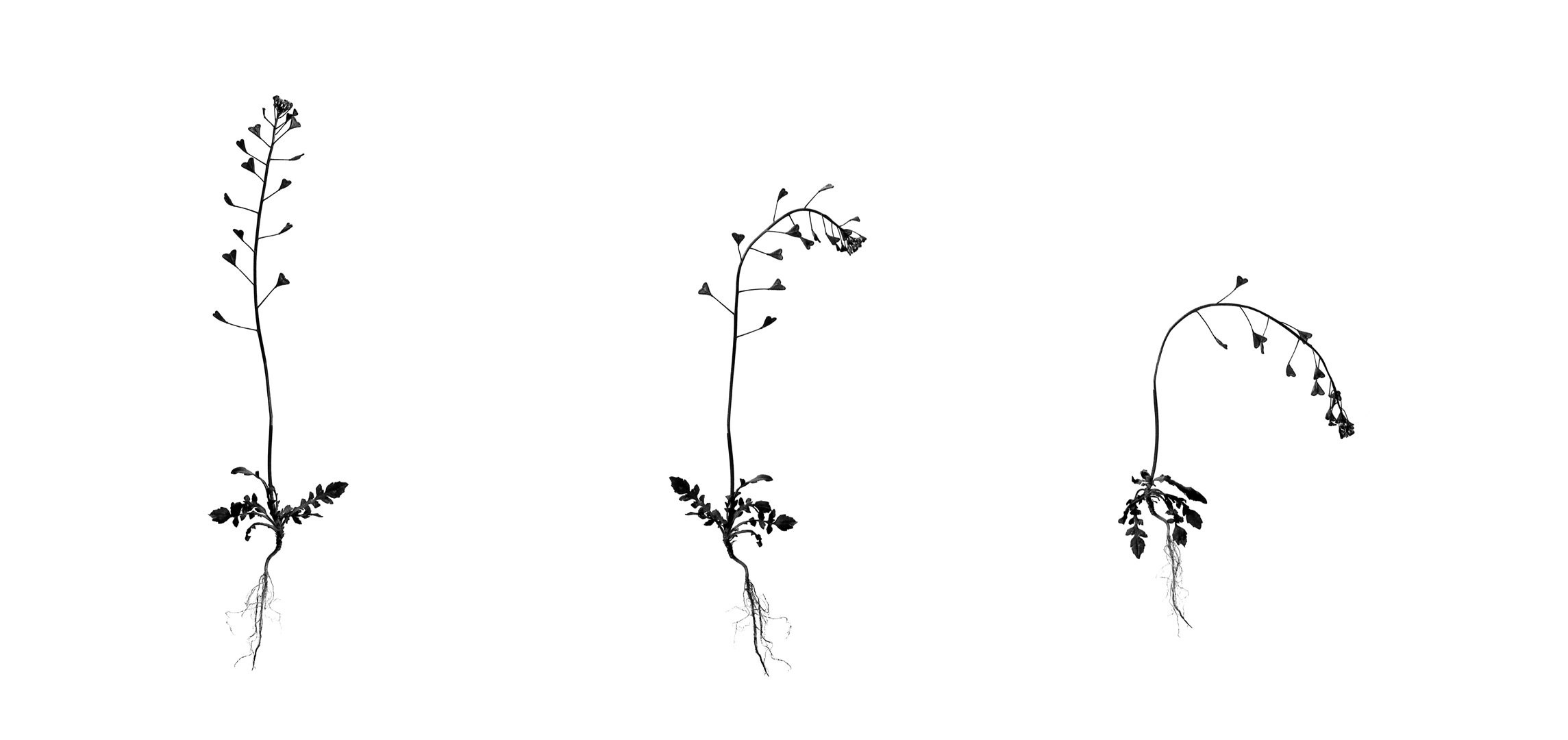 002 La vida efímera -Irreversible